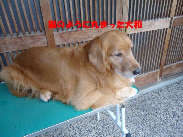 010_20121005210732.jpg