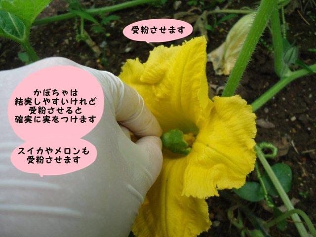 011_20120703220807.jpg
