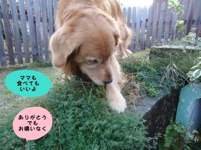 011_20121128210731.jpg