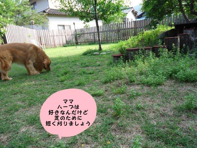013_20120608102625.jpg