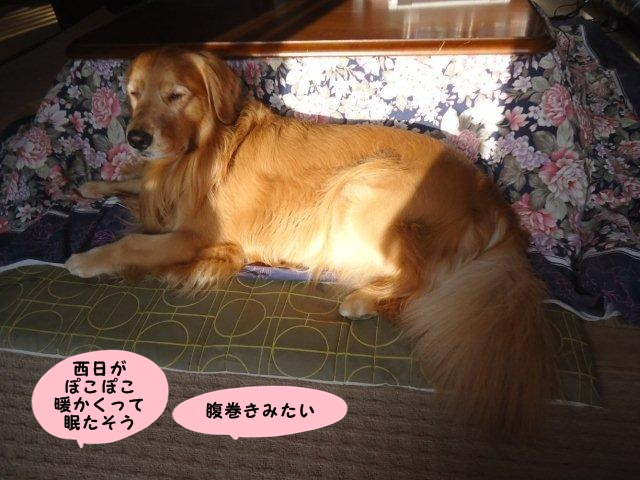 013_20121013203838.jpg