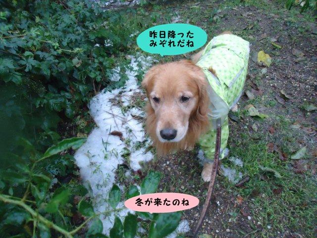 013_20121116093518.jpg