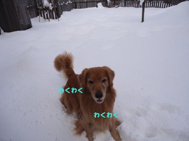 013_20121210163511.jpg