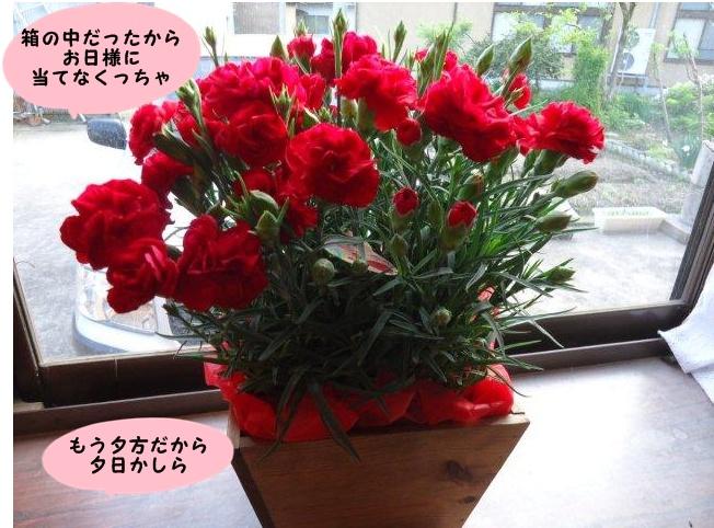 017_20120513202740.jpg