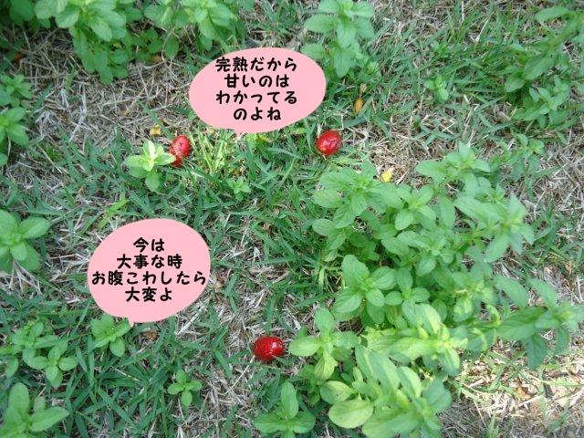 020_20120608102745.jpg
