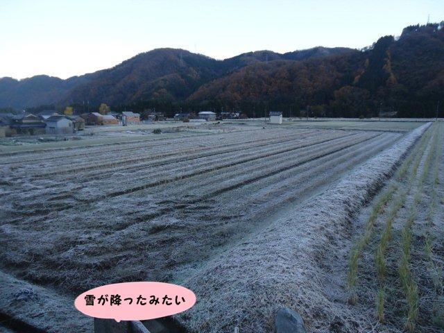 025_20121125214359.jpg