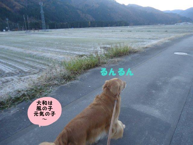 026_20121125214400.jpg