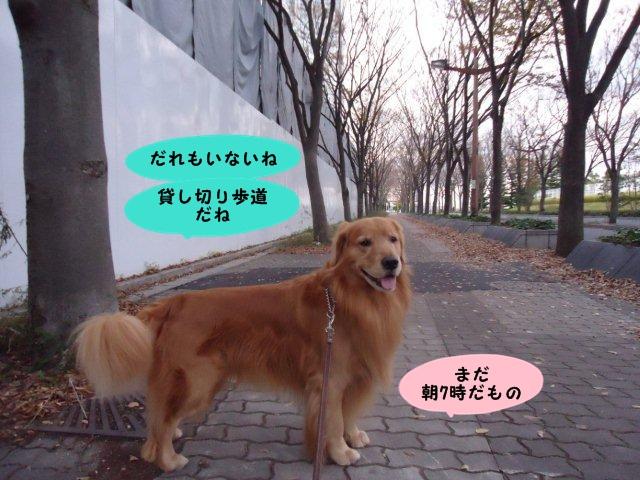 191_20121203103245.jpg