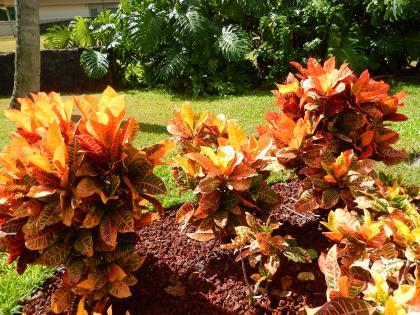 ハワイ2014.9ハワイの草花