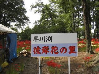 hayakawabuchi120930-202