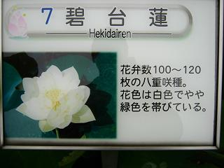 kodaihasu120722-245