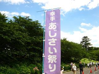 satte-azisai120610-202
