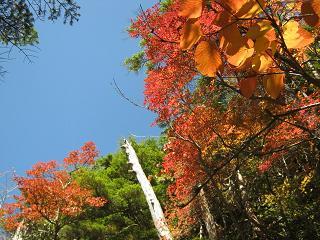 yusengatake121008-219