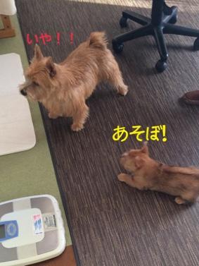 fc2blog_20141019112637eee.jpg