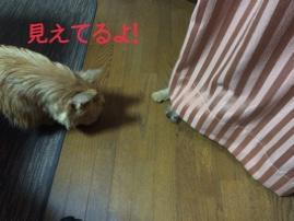 fc2blog_201410292204483fc.jpg