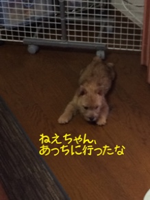 fc2blog_20141029220732887.jpg