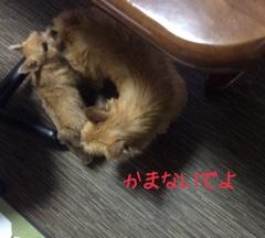 fc2blog_201410292208344d8.jpg