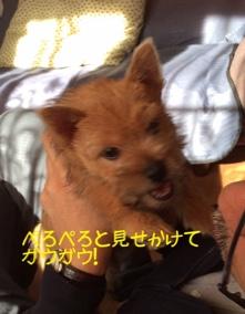 fc2blog_201410292219314a2.jpg
