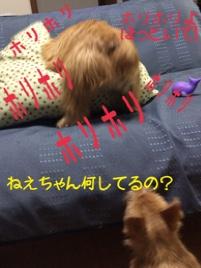 fc2blog_20141030094032f9d.jpg