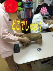 fc2blog_20141102140514c1a.jpg