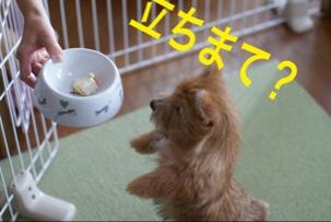 fc2blog_20141116214345e92.jpg