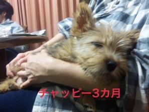 fc2blog_20141116221339da2.jpg