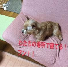 fc2blog_2014112310585937d.jpg