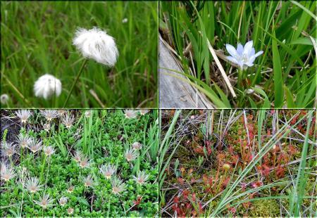 燧ケ岳の花々 その1