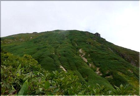谷川岳 ササ畑