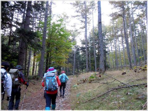 奥深い森の林道で、歩きやすい