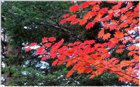紅葉もピークを迎えますね