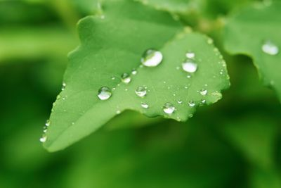 green-leaves_beiz_jp_S02312a.jpg
