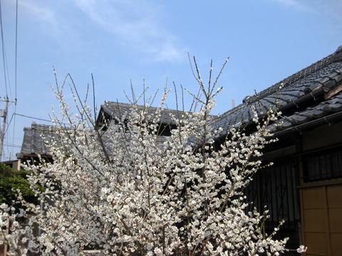 Matsudo_Mer23,12