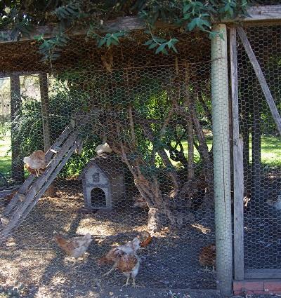 20141012鶏小屋