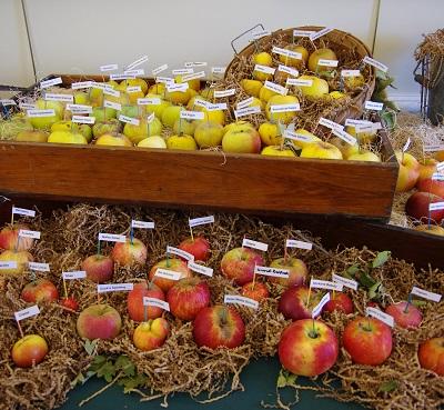 20141022リンゴ