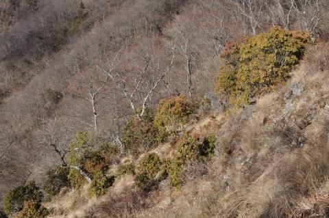 20131215 tanzawa tonodake 010