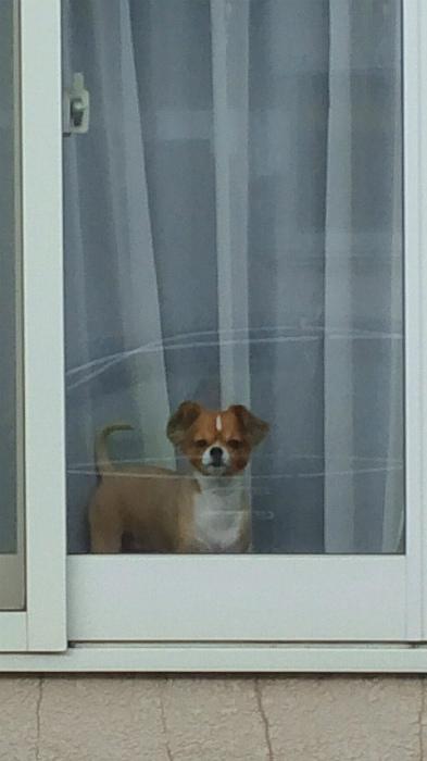 ブログ窓のまめ
