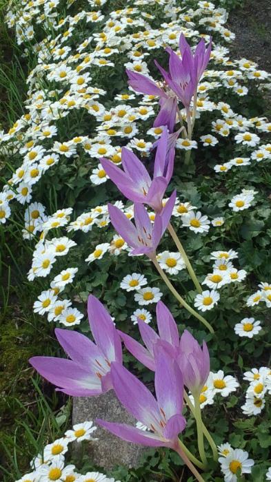 ブログ庭の花