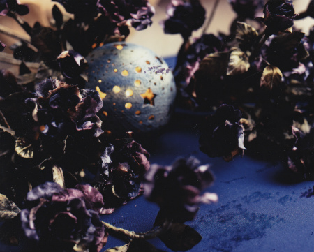 ブログ灯りの薔薇