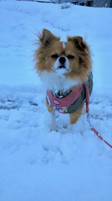 ブログ雪まめ2