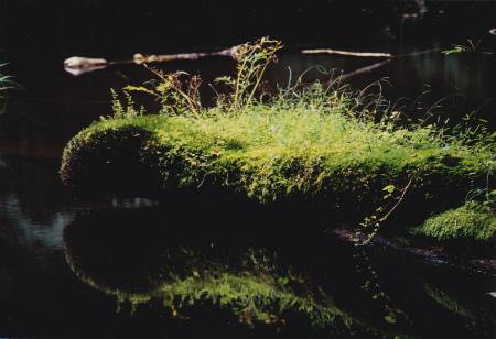 ブログ鏡沼1