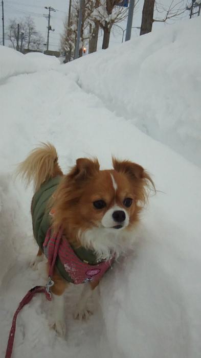 ブログ雪散歩2