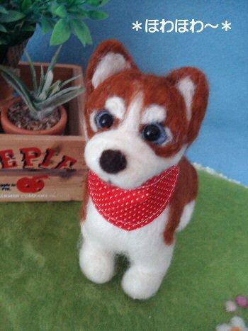 ハスキーちゃん子犬1