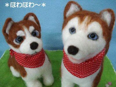ハスキーちゃん子犬と成犬