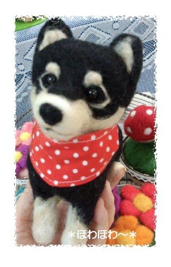 黒柴犬ちゃん