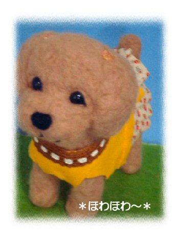 toypoodle-5.jpg