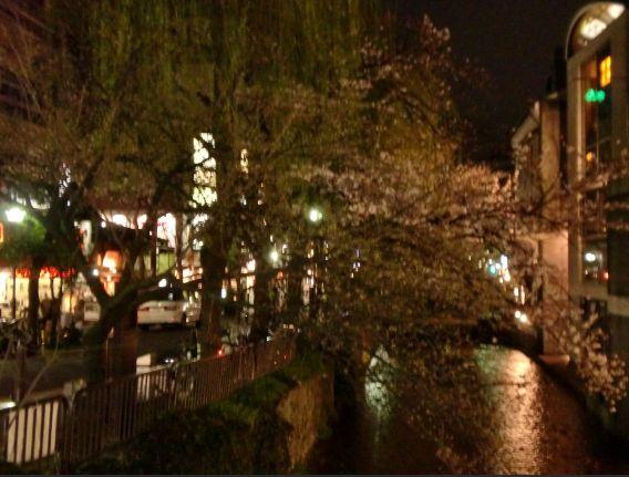 池田屋ななめ向かいの三条河原をいろどる桜のアーチ 綺麗でした