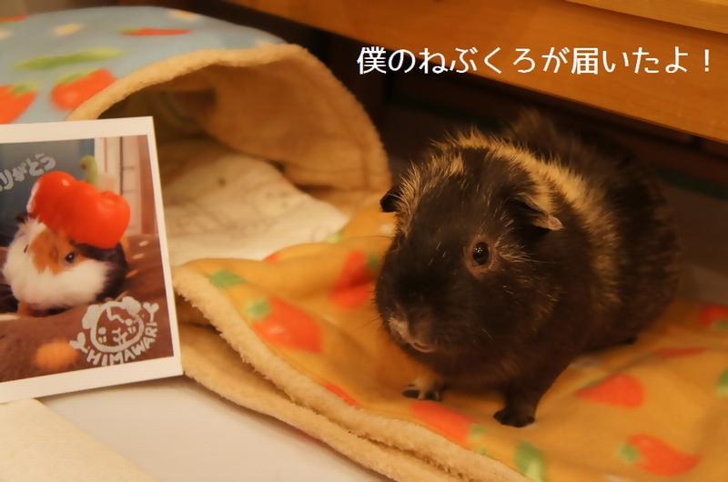 hさんちの桃太郎くん1