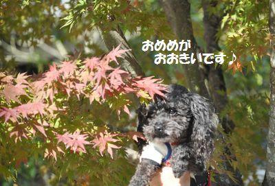 DSC_0197_201311251917567e7.jpg