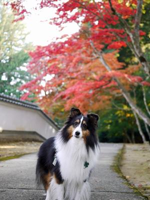 09お寺の紅葉